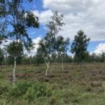 Struffelter Heide
